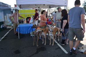 greyhound adoption photo